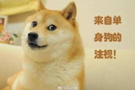 日本动画业界再曝辛酸现状,新恒结衣人妻属性再现!