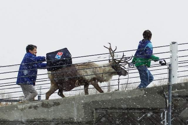 代表圣诞老人给您送披萨啦!日本推出驯鹿送外卖活动