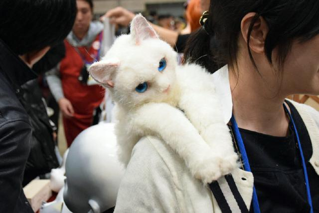 背着猫咪白狐去漫展 可拯救二次元大龄青年